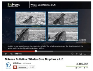 The Top NYC Museum Video of 2012 -- an AMNH Science Bulletin Whales Give Dolphins a Lift