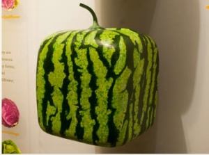 Japanese cube melon. Photo: AMNH/D. Finnin