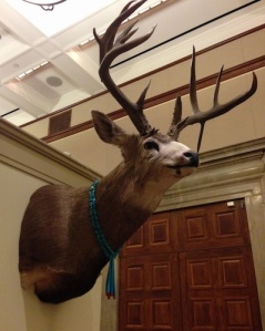 Hunted deer is honored with a Zuni necklace