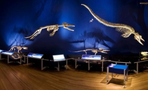 Whales exhibit tells the evolution story. Courtesy: Museum of New Zealand Te Papa Tongarewa