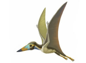AMNH illustration of super-tiny Nemicolopterus from China (10 inches) proves that not all pterosaurs were giants. He lived in the forest.